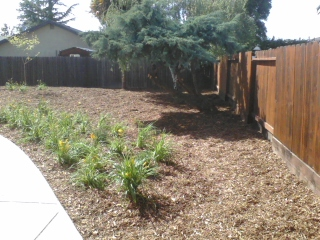 Feeney landscaping